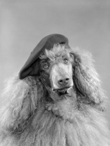 """It's come to this?  You can now Google """"poodle beret"""" and get, literally, THOUSANDS of pictures of poodles in berets.  Fucking hell."""